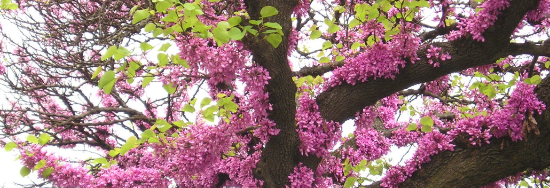 Kvety kineziologie